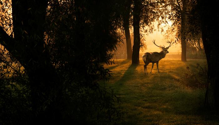 deer hunting in greensboro georgia