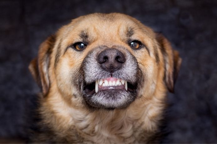 Understanding the Emotional Effects of Dog Bites
